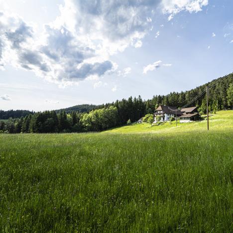 Waldfrieder Ferienwohnungen, Blick zum Hof