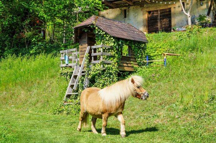 Dohlenbacherhof Pony