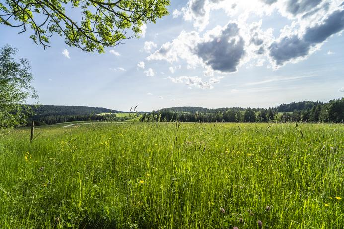 Waldfrieder, Blick ins Tal